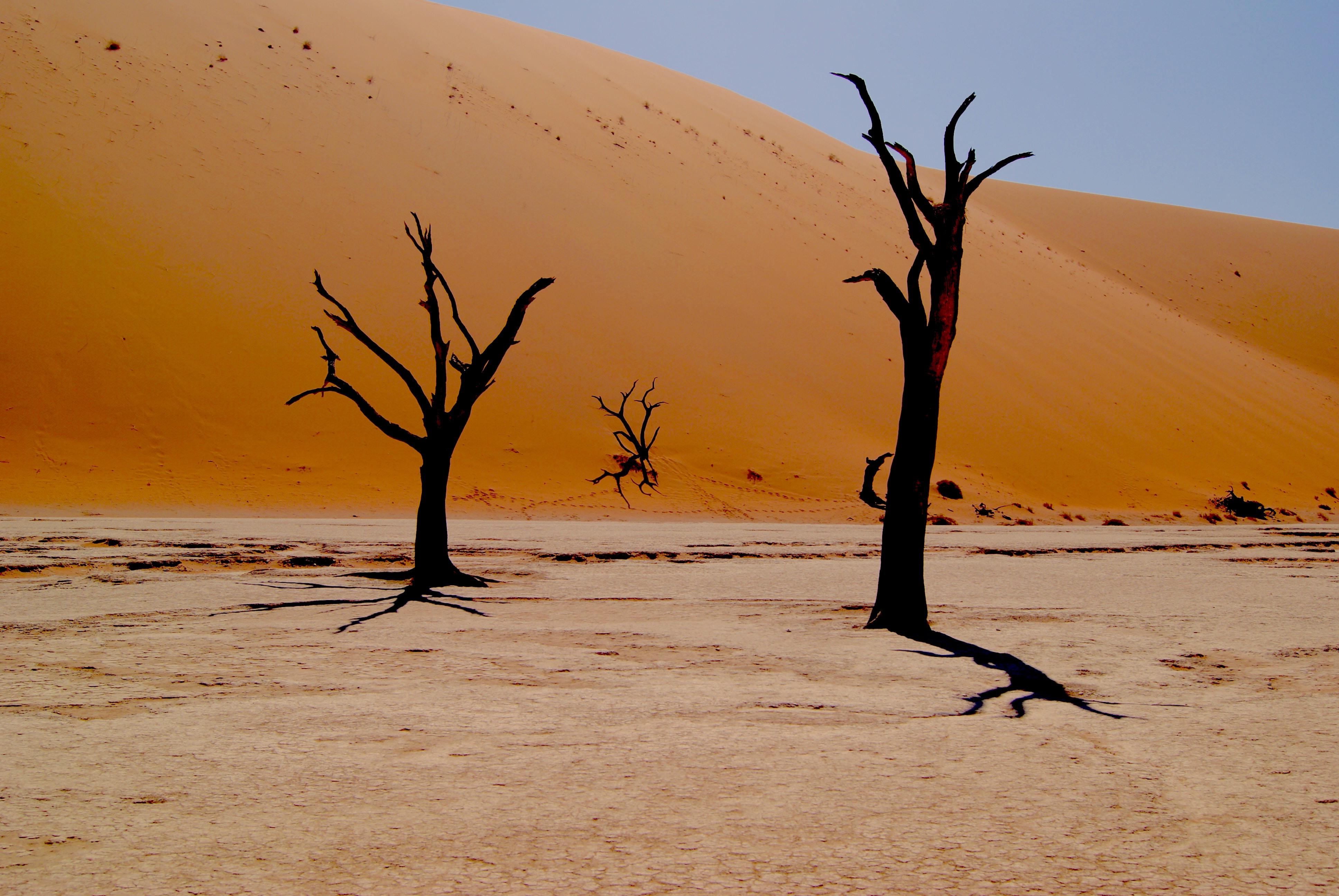 Desolate trees in the sandy desert of Deadvlei Hiking Trail