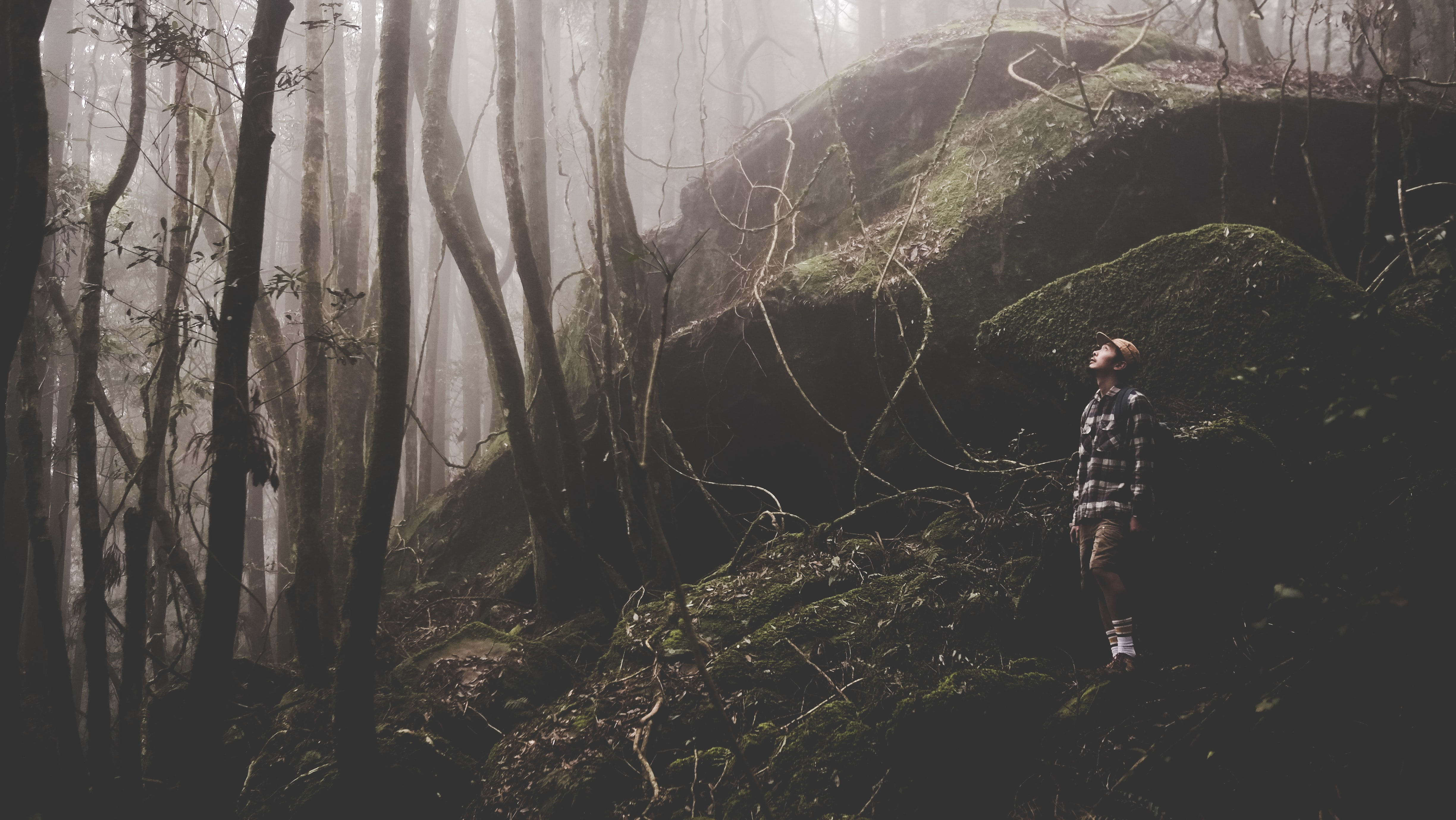 A male hiker looks up while standing on mossy rocks in a fog-shrouded forest