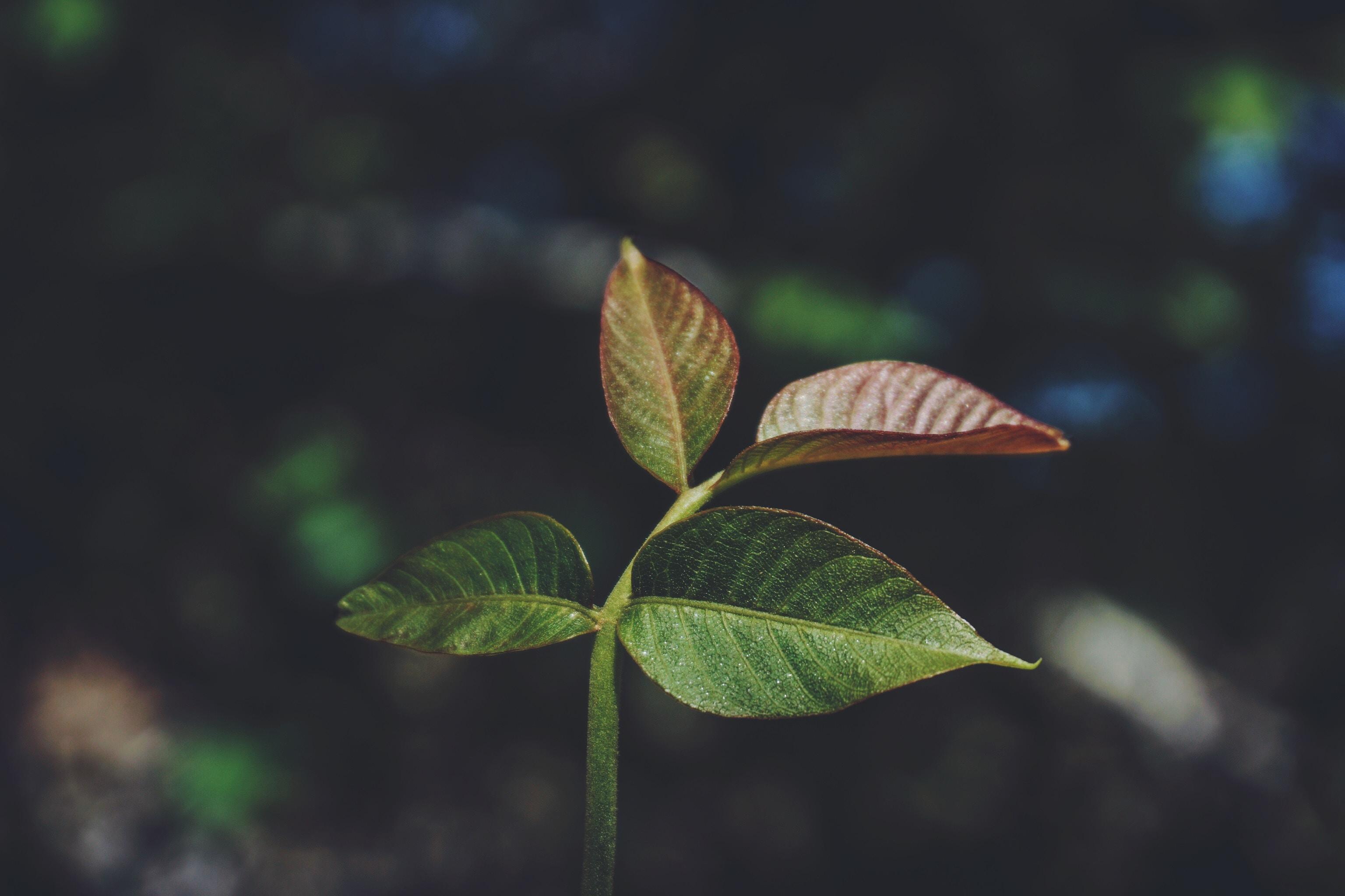 macro shot of green and maroon plant