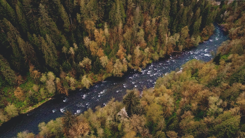 aerial photography of river between pine trees