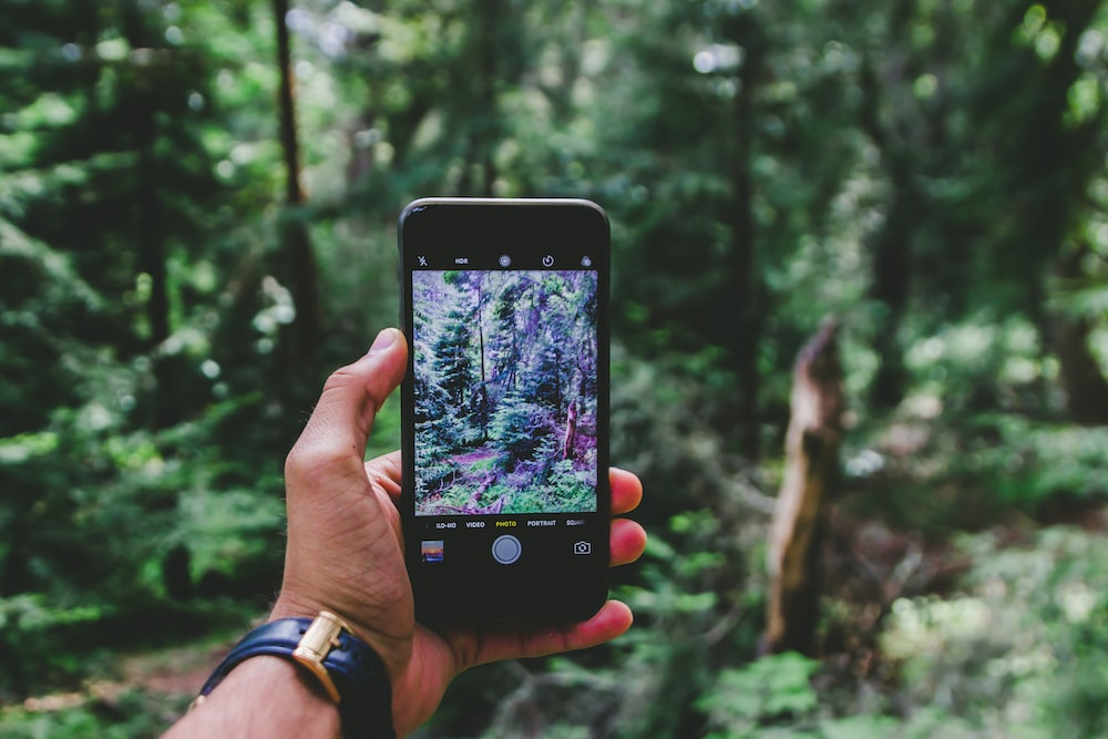 person hand talking photo of plants