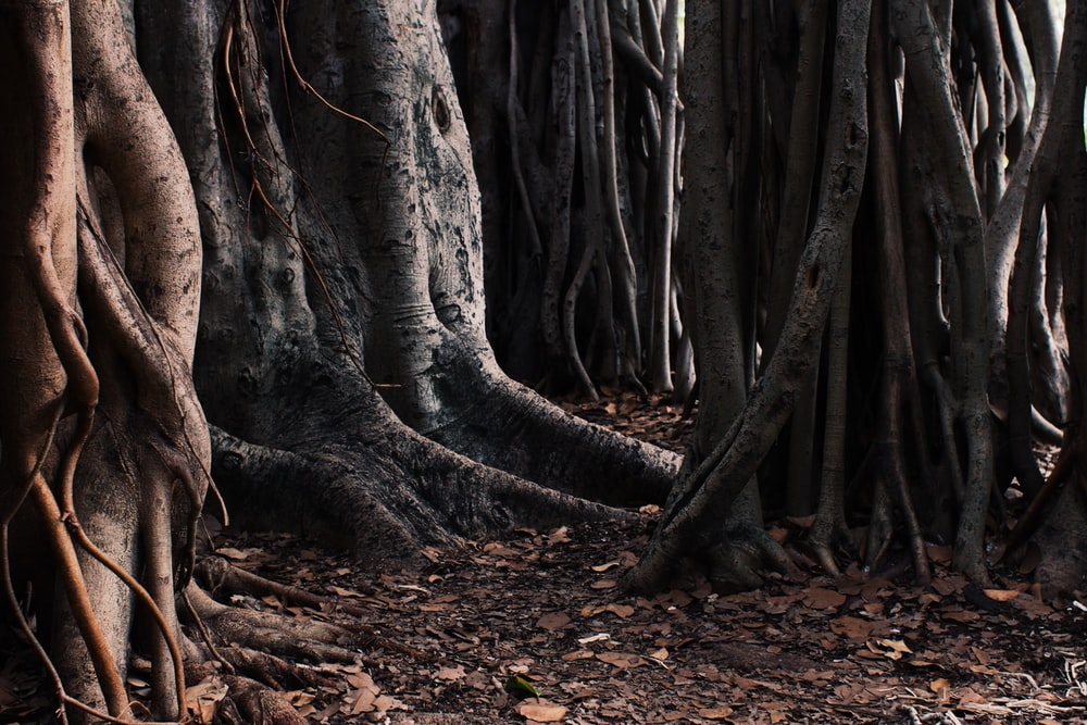 Tree trunks and fallen leaves on the forest floor