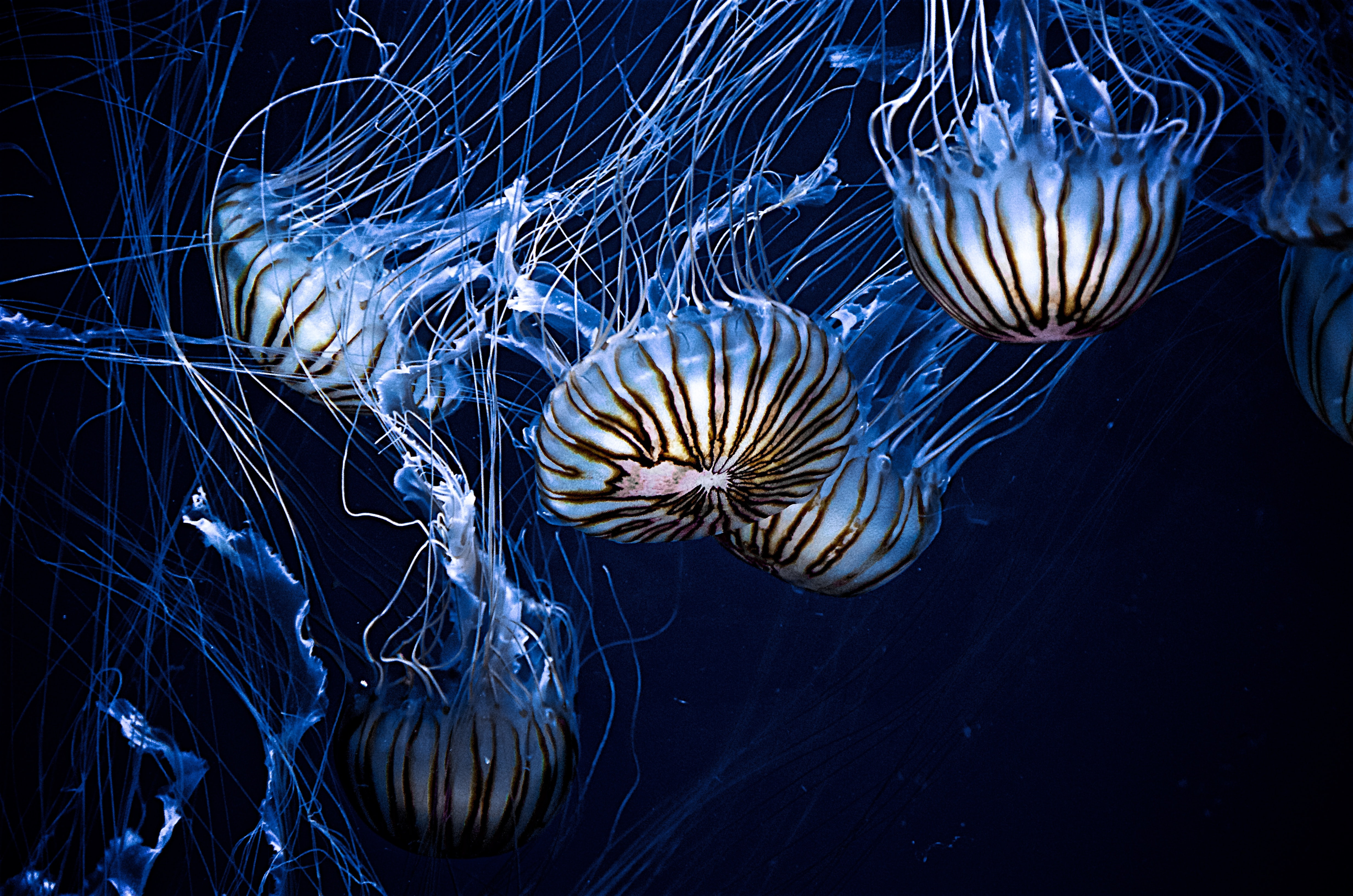 several jellyfishes underwater