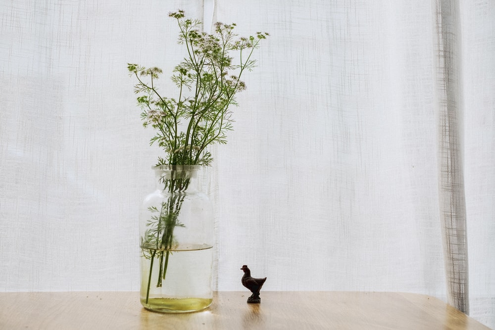 green plant on clear glass vase on brown wooden surface