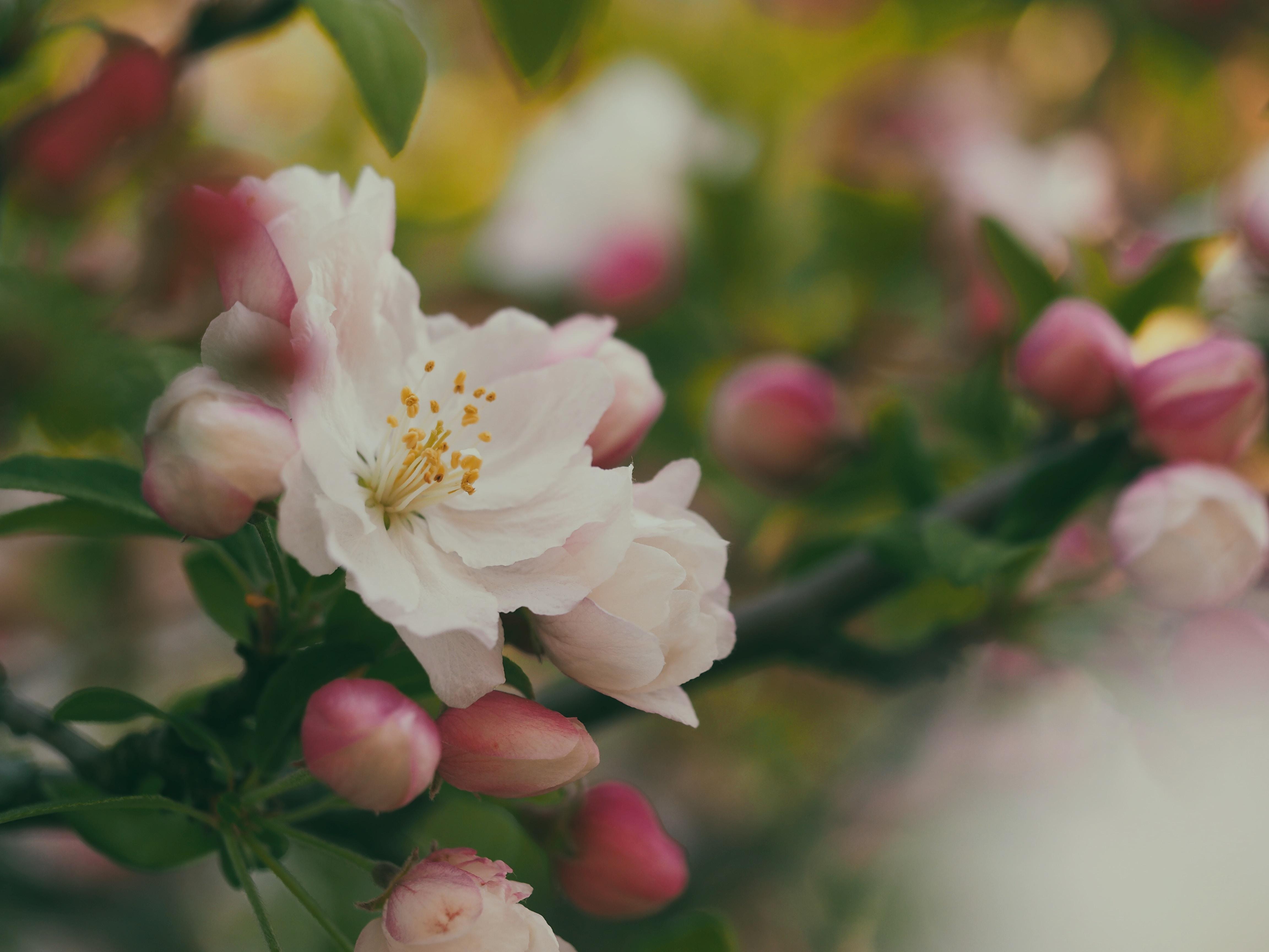 A macro shot of a white flower.