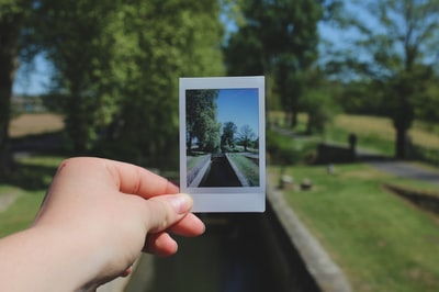 person showing photo of trees during daytime