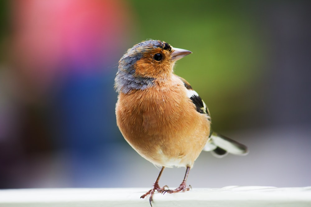 brown and black bird in selective focus photography