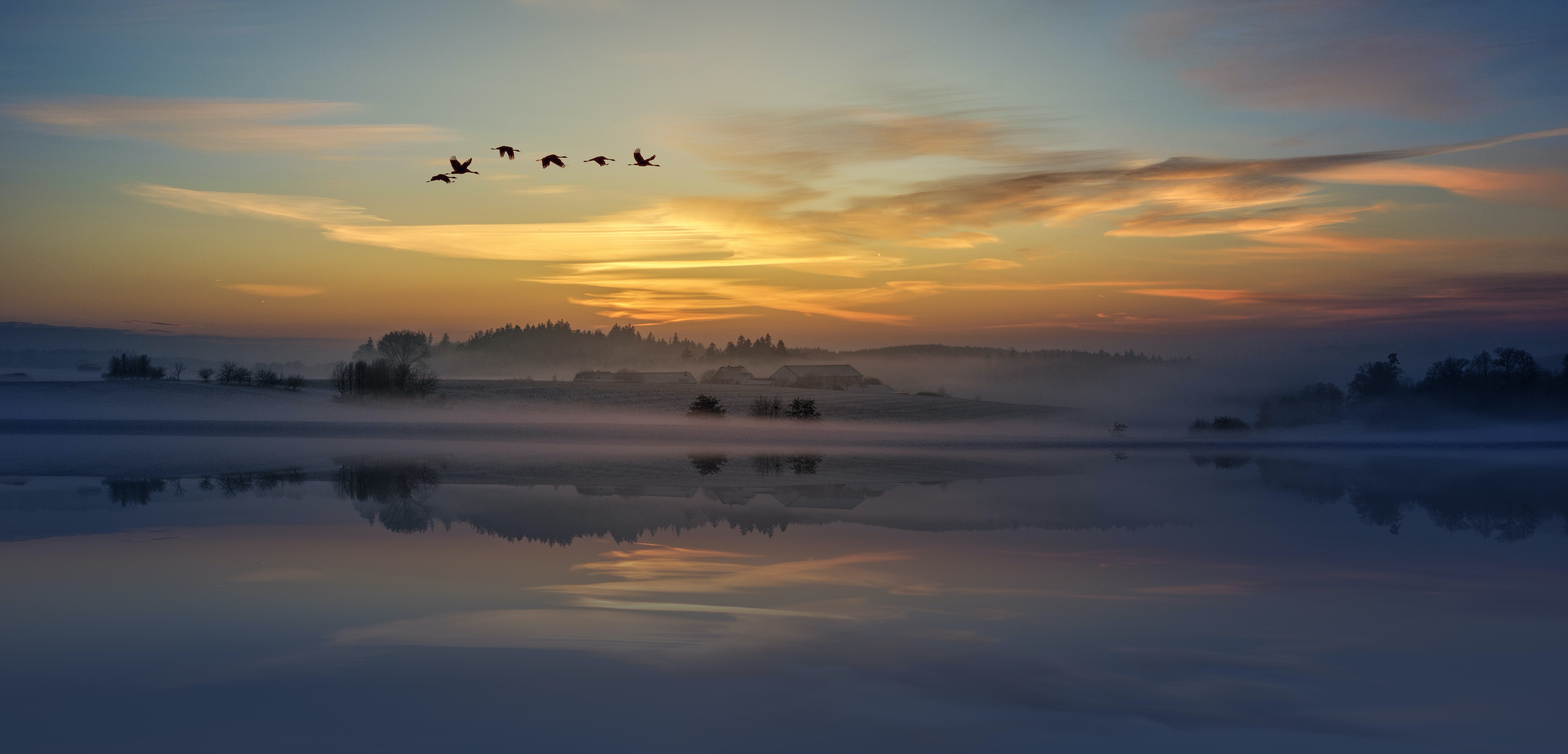 silhouette of birds flying above body of water