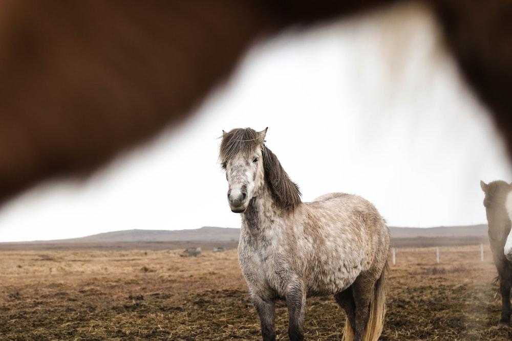 brown white horse on grass field
