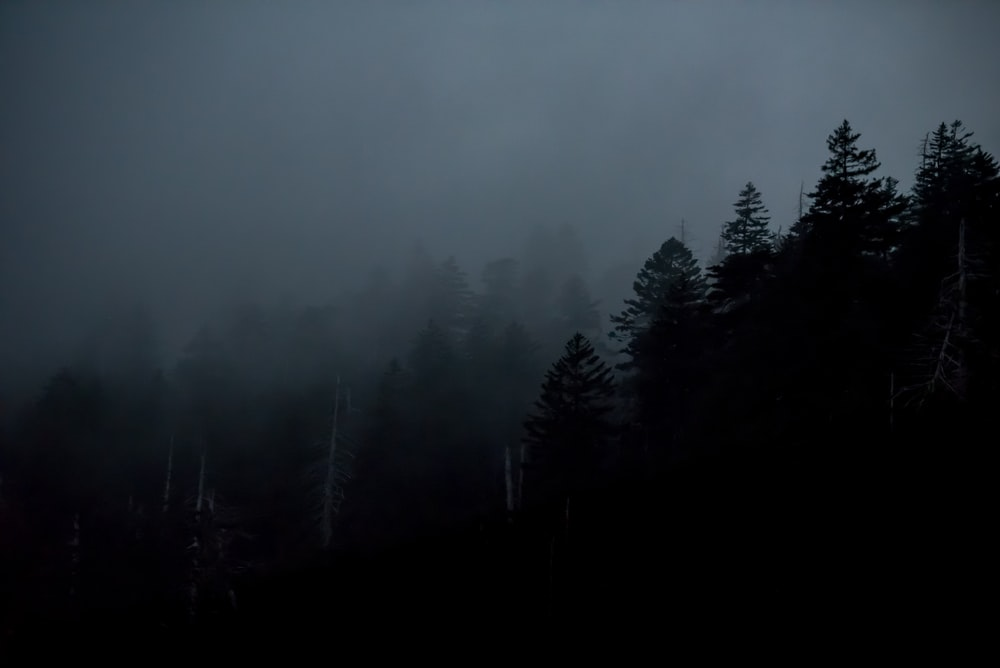 silhouette of trees during nighttime