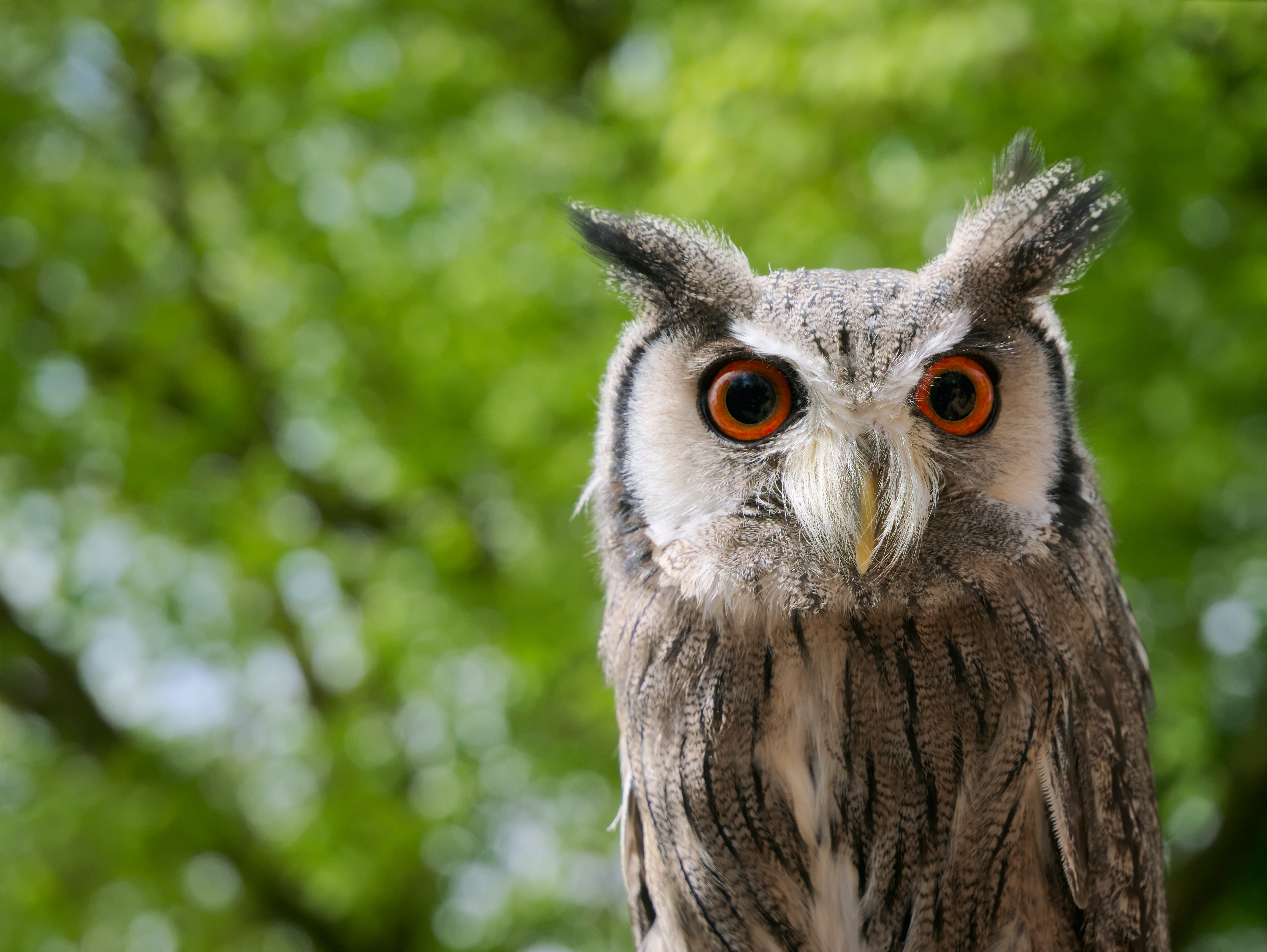 An owl with big orange eyes in a green, lush setting