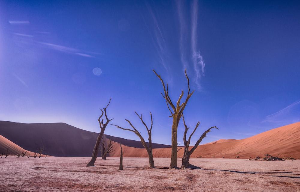 bare trees on desert