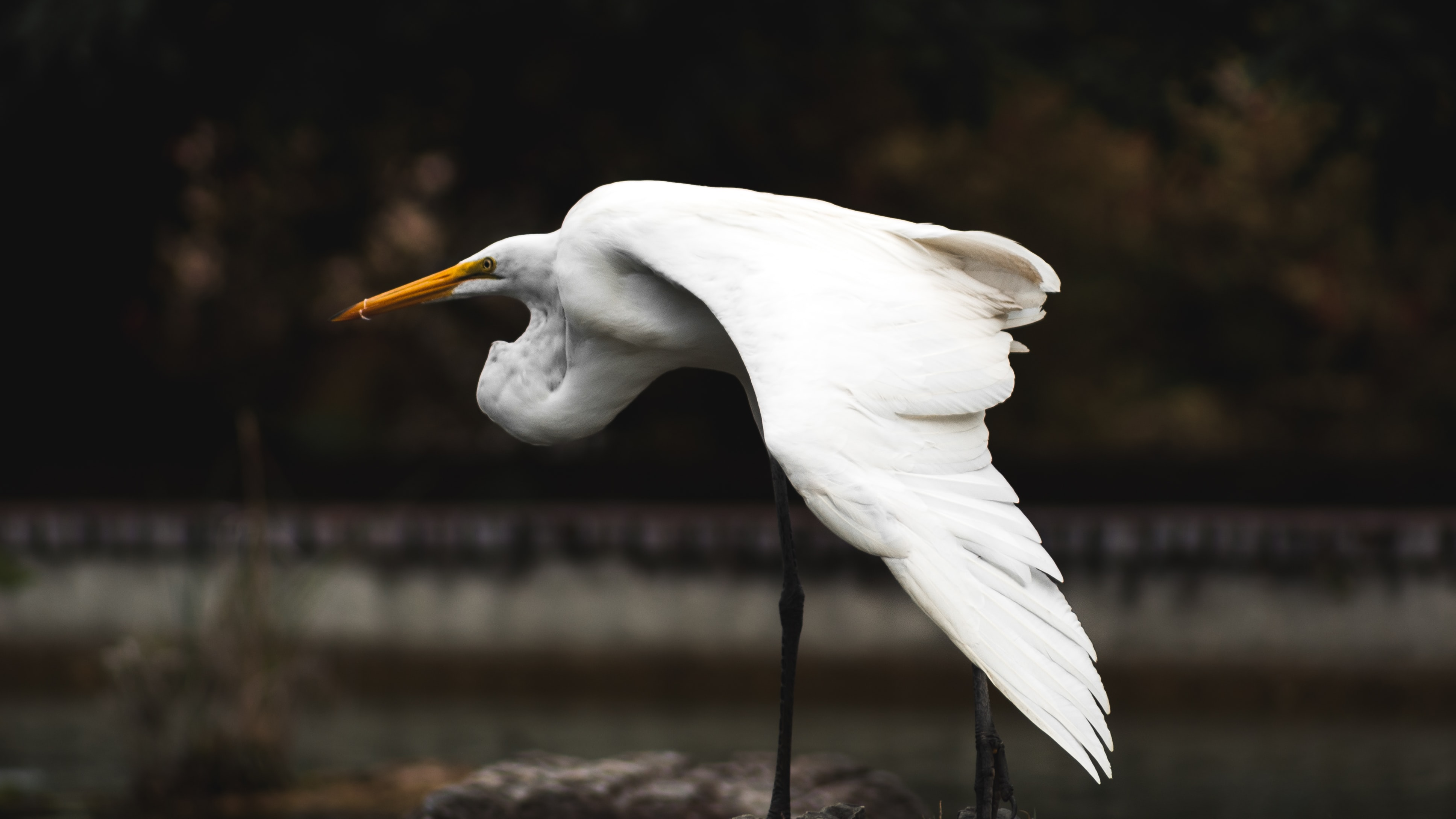 A white bird with a yellow beak and tall skinny legs