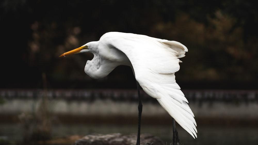 white long legged bird on stone