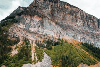 trees beside mountain cliff