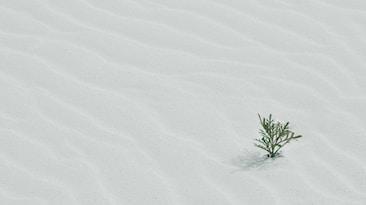 green tree on sand