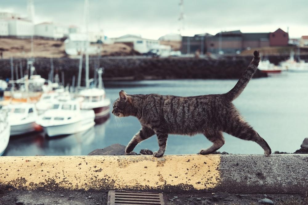 tabby cat on ledge