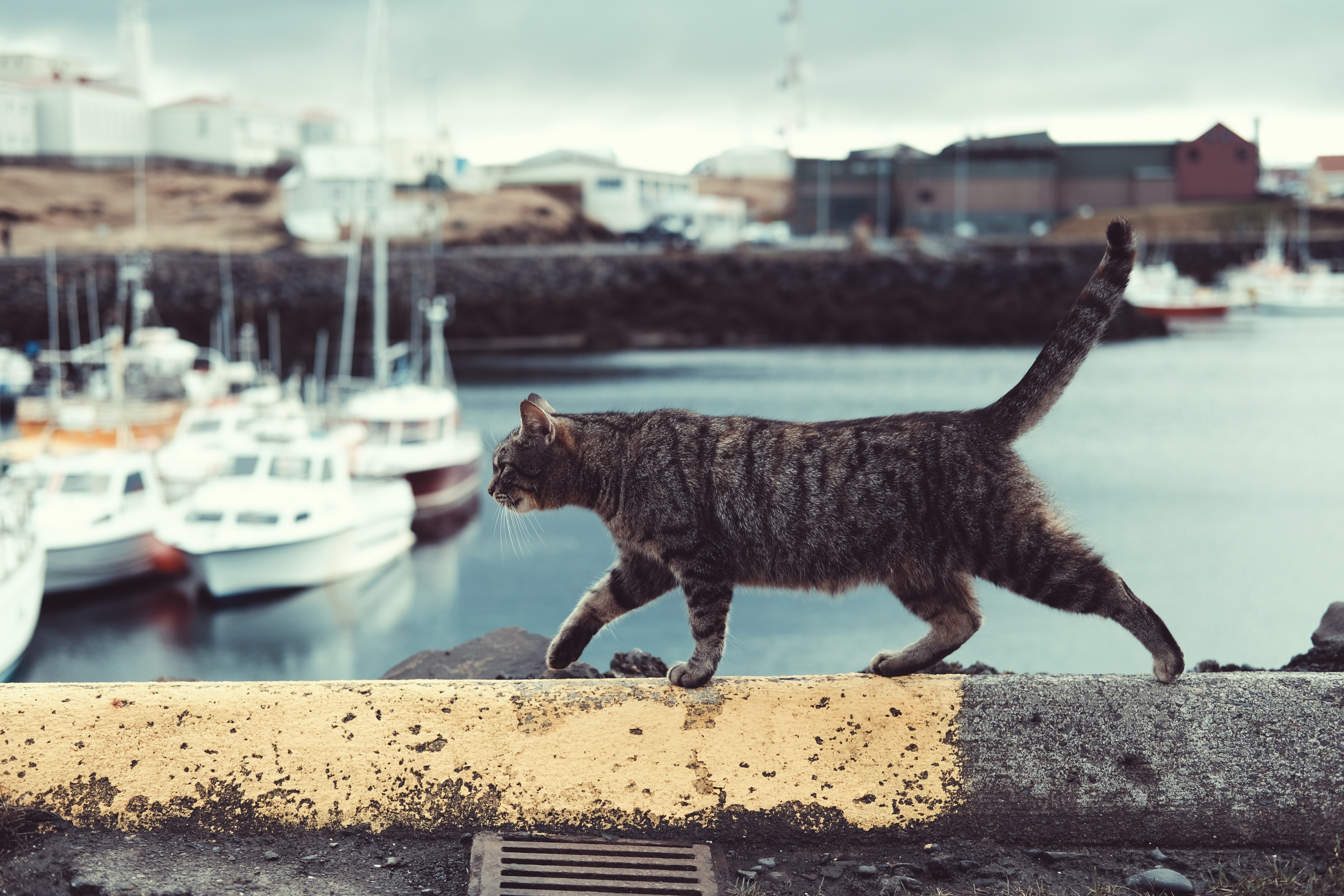 A tabby cat walking along a ledge over a harbor