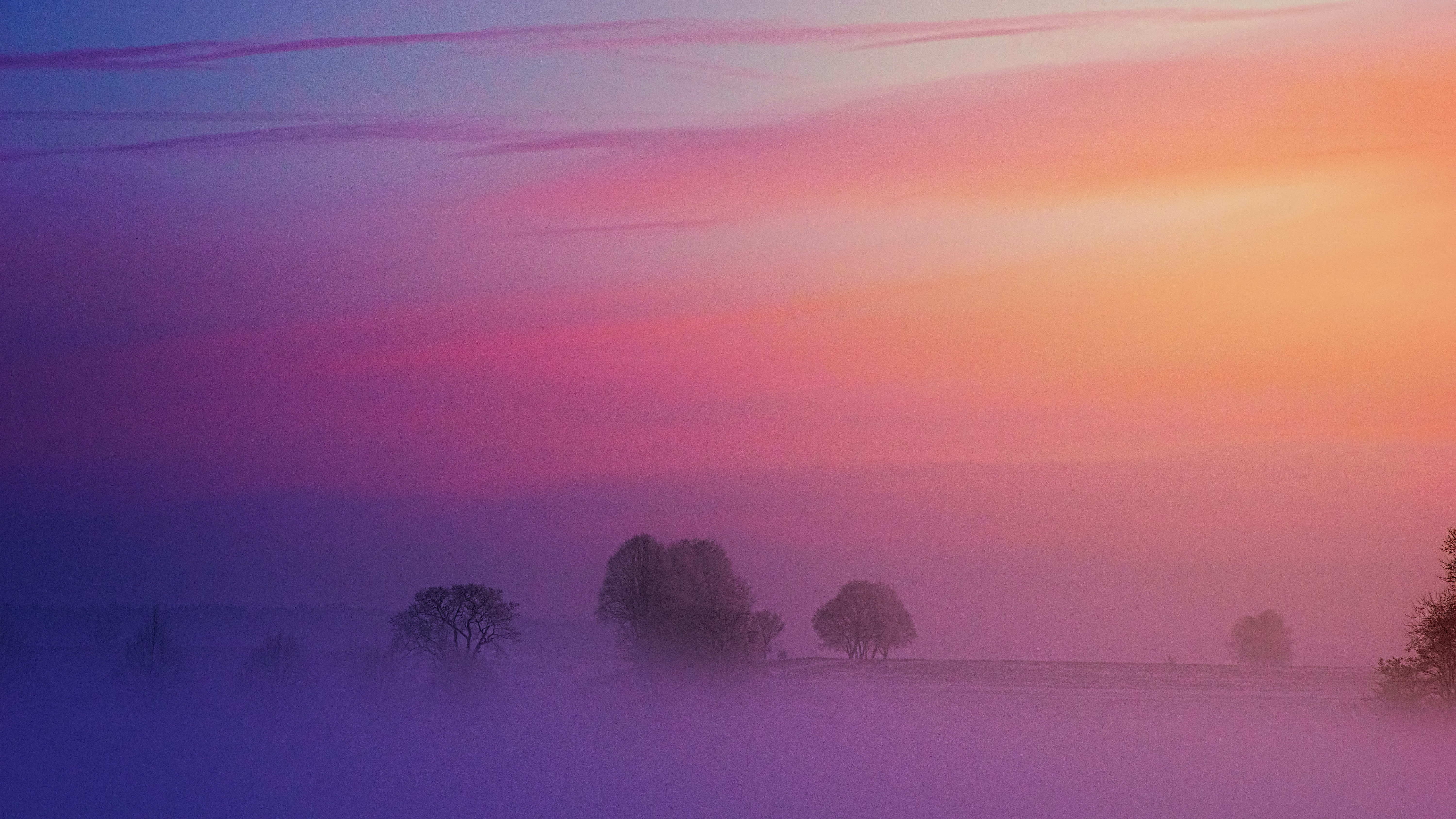 Fog covered trees with a purple sunset overhead.