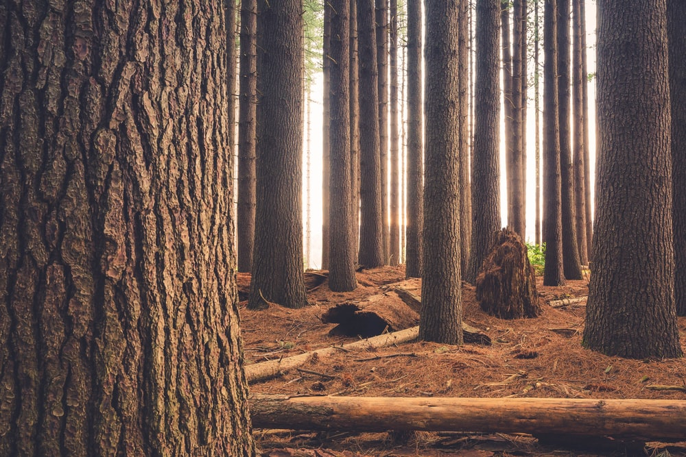 brown log surrounded with trees