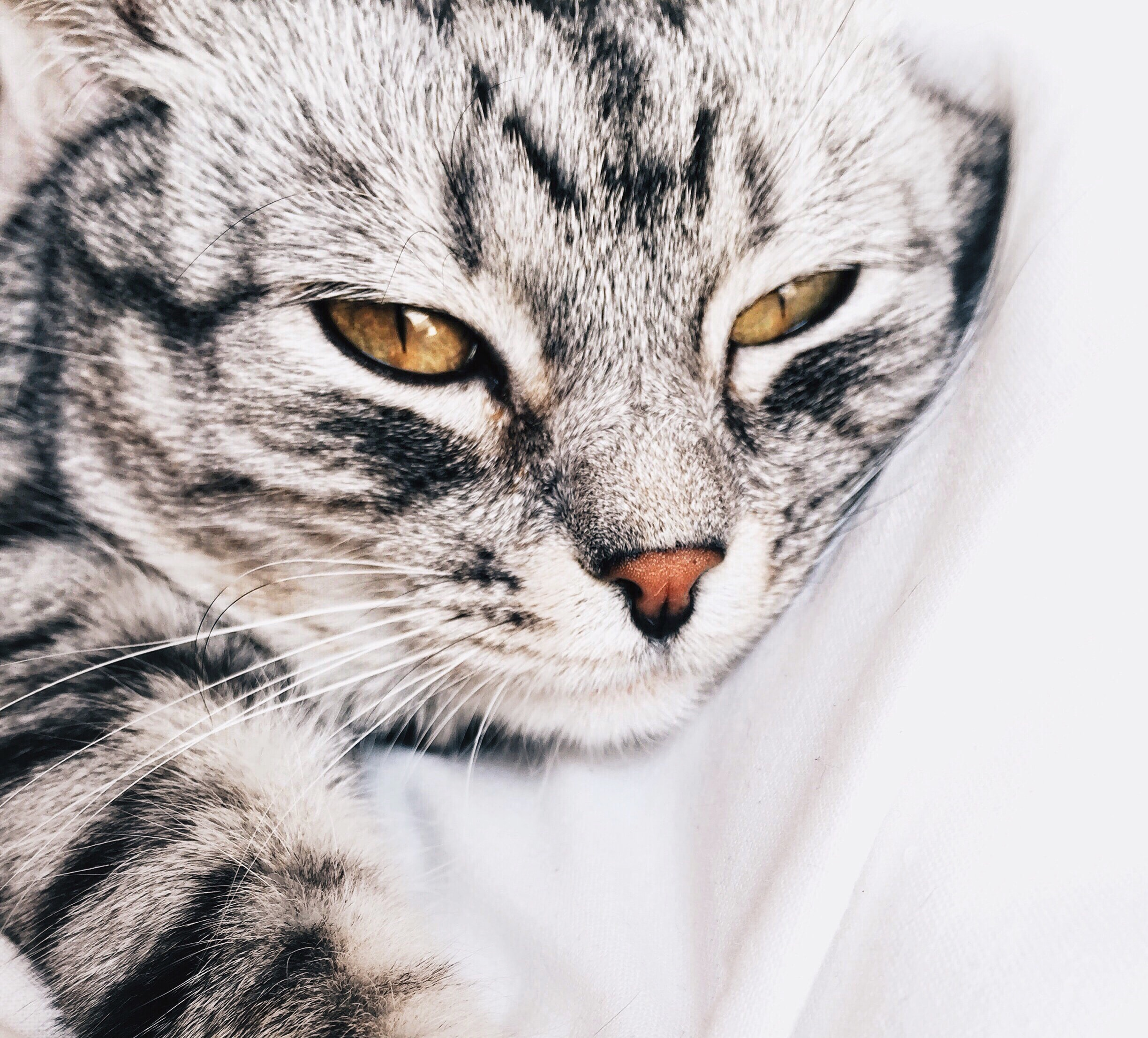 Close-up of a tabby cat lying down with its eyes half-closed