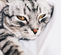 tabby cat laying on white textile
