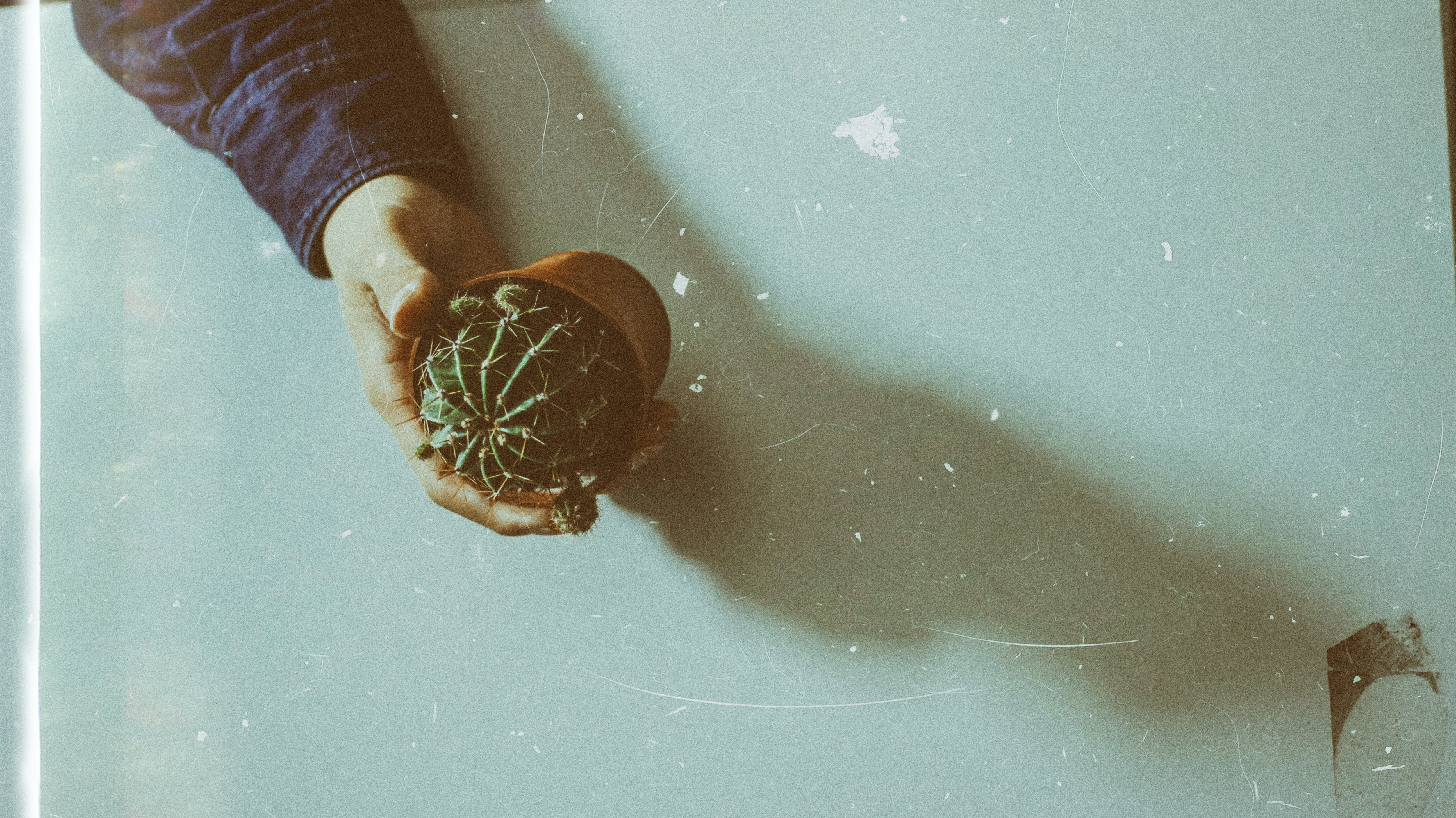 persons hand holding cactus planter