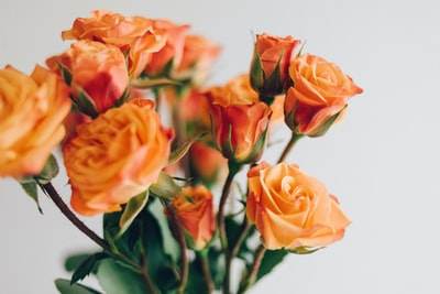 close up photo of orange roses bouquet teams background