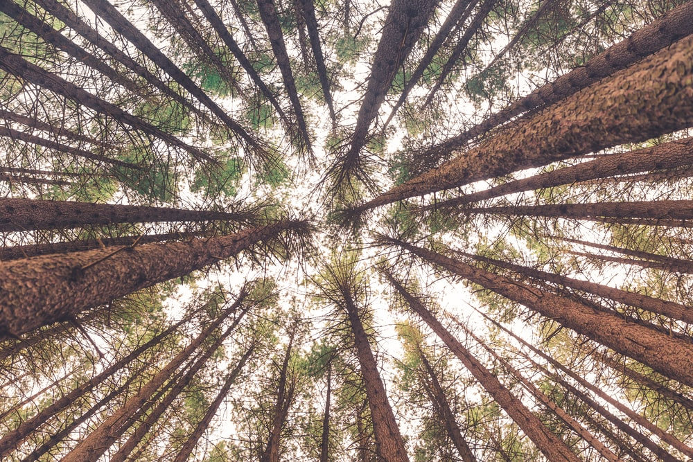 low angle view of trees