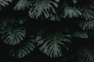 1620. Növények világa