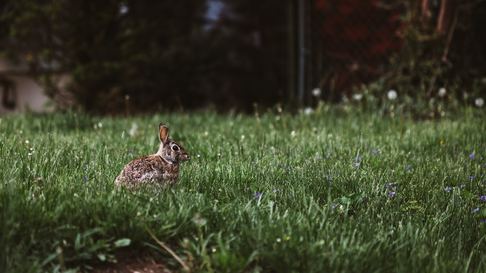 selective photography of rabbit