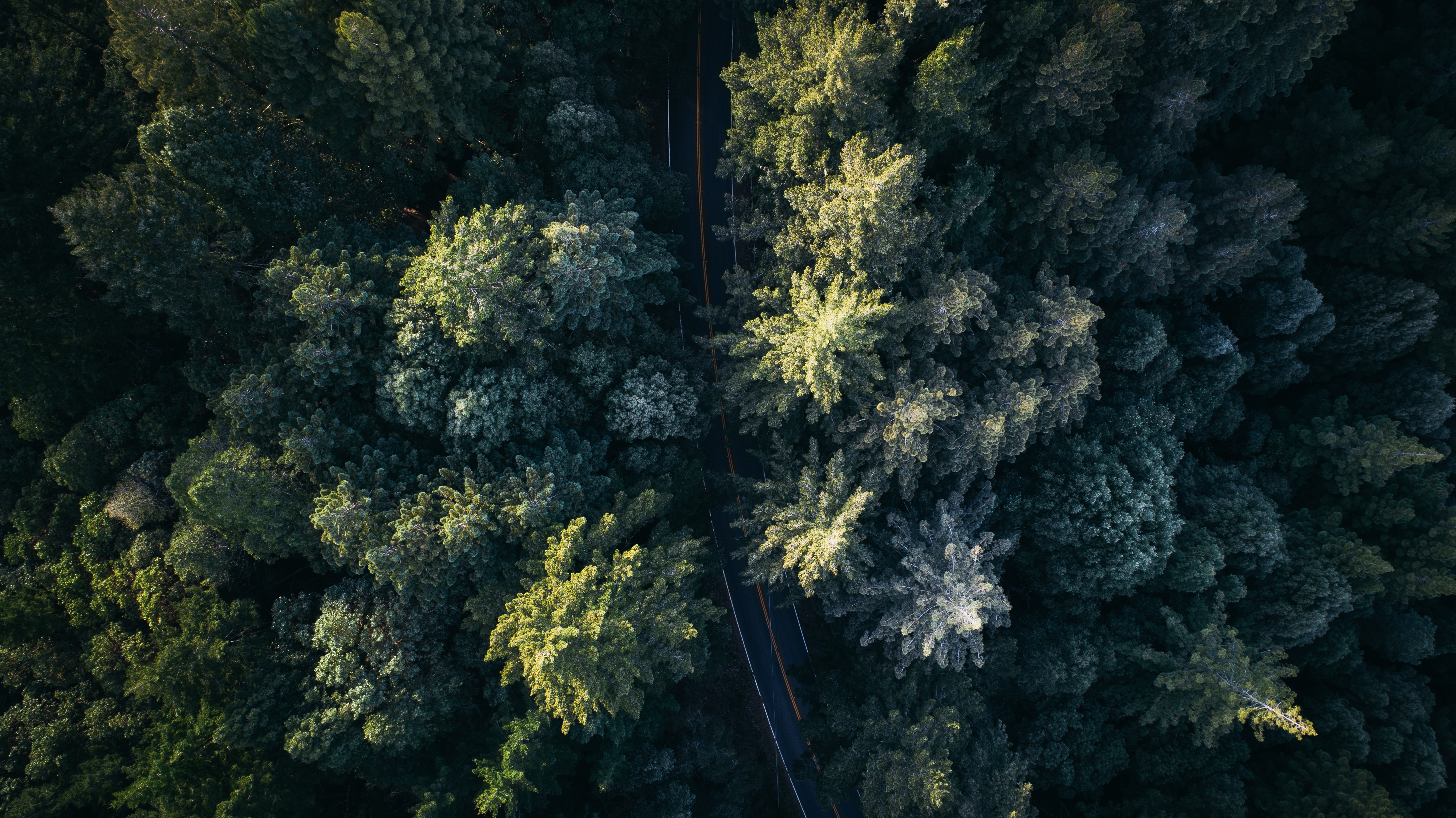 Aerial view of a curving road through a dense forest