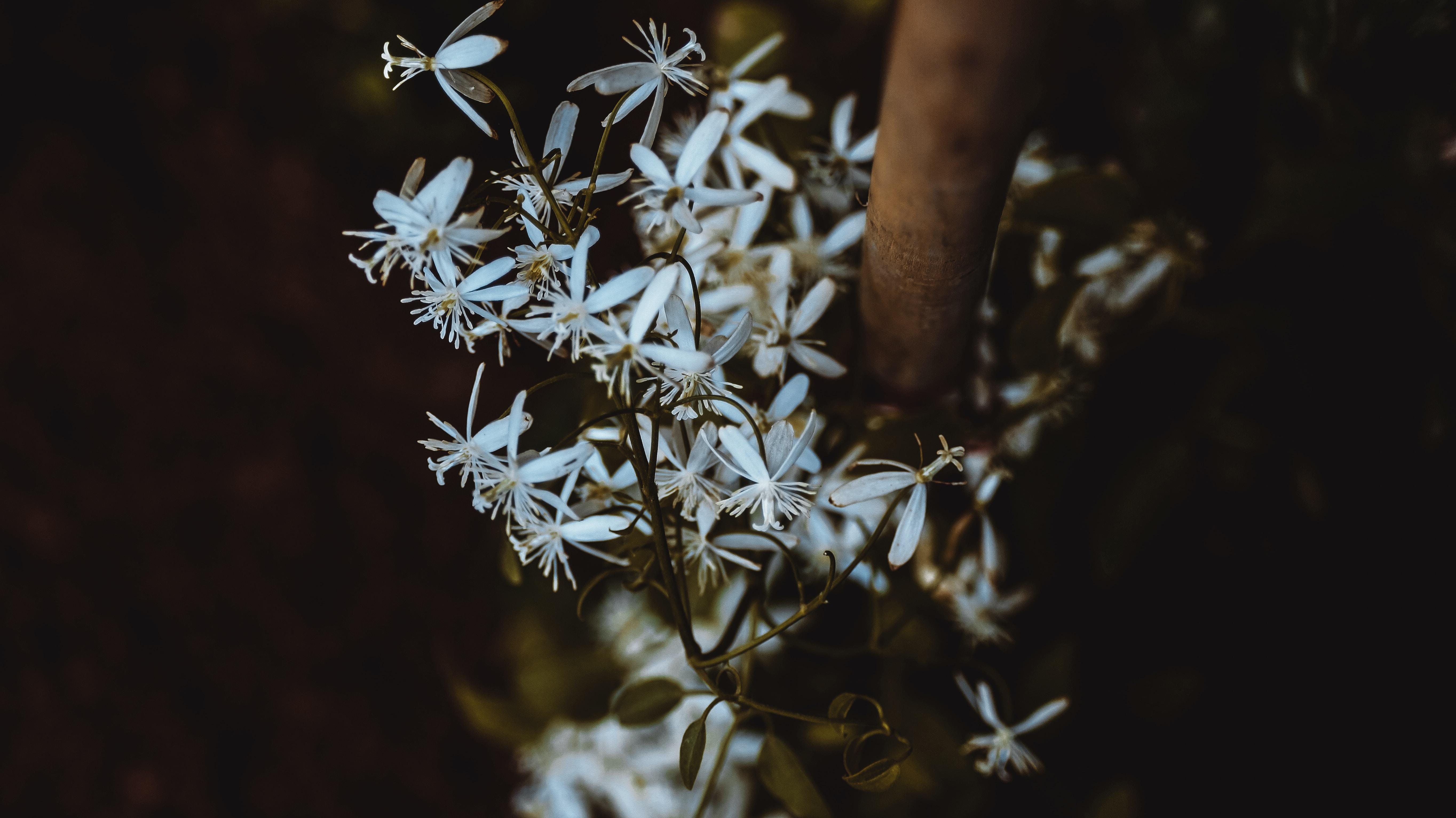 White wildflowers in a dark natural landscape