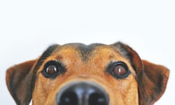 Brain Games For Dogs: How To Keep Your Pup Mentally Stimulated (And Well-Behaved)