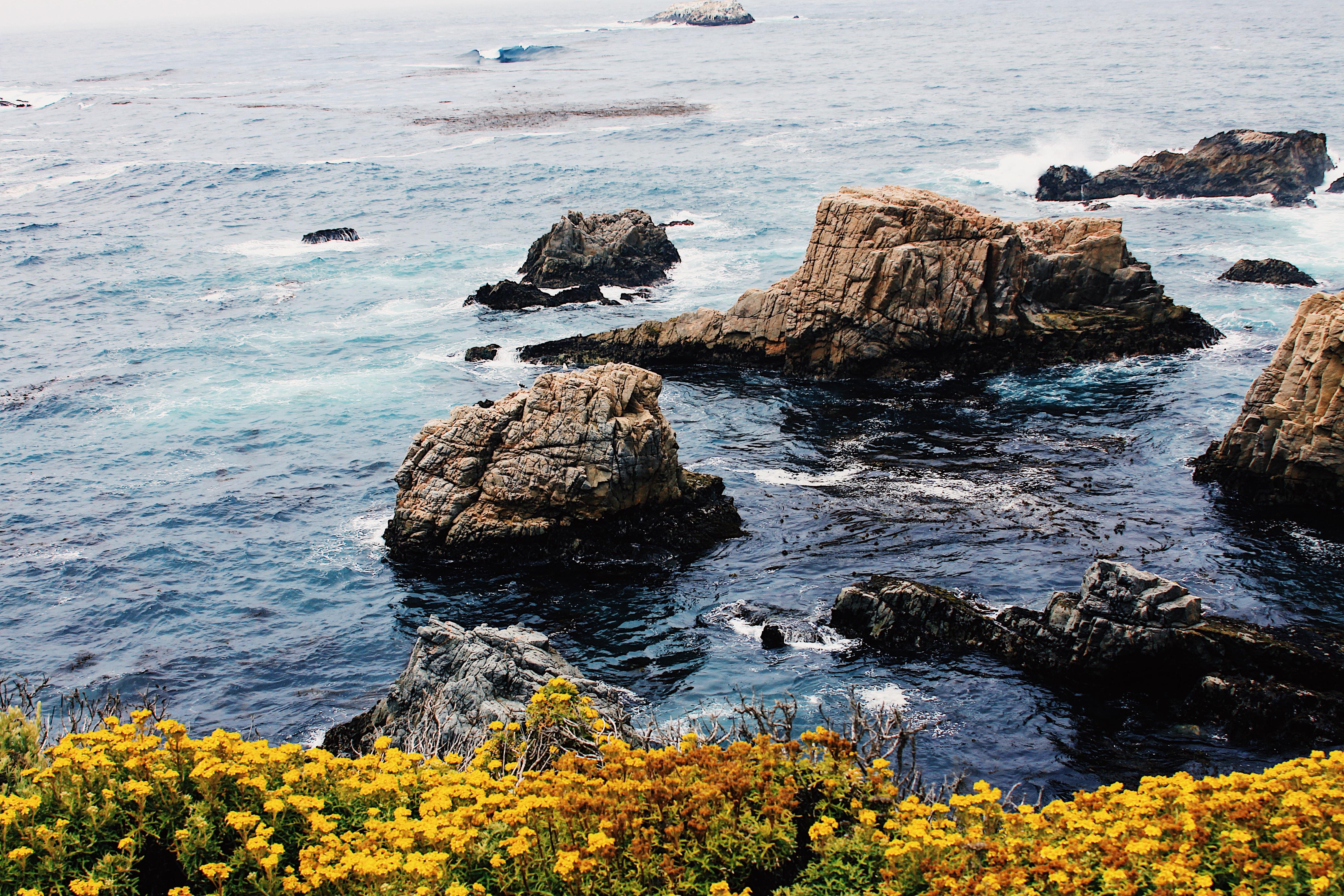 scenery of yellow field of flowers beside body of water