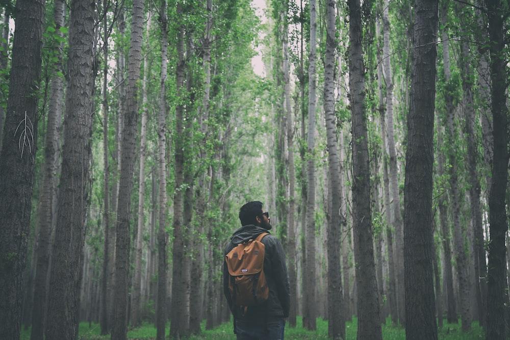 man standing between trees