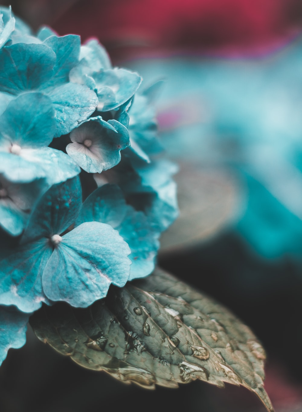macro photography of blue flowers