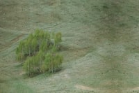 aerial photo of green leafed trees