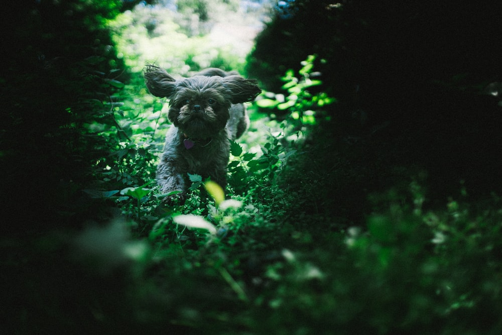dog running near plants