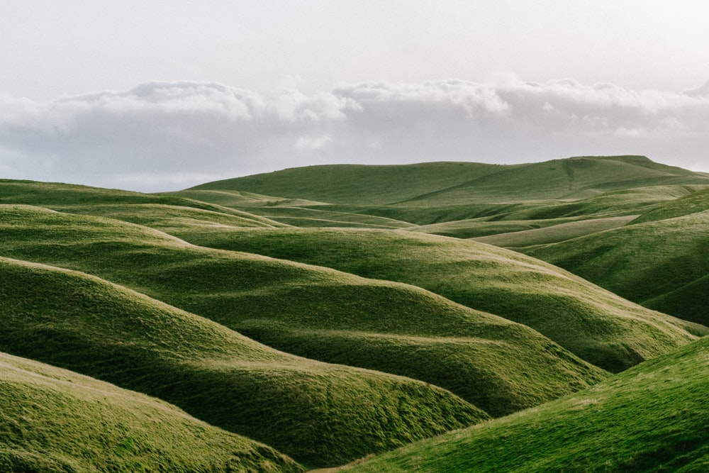 rolling down the hill pictures download free images on unsplash