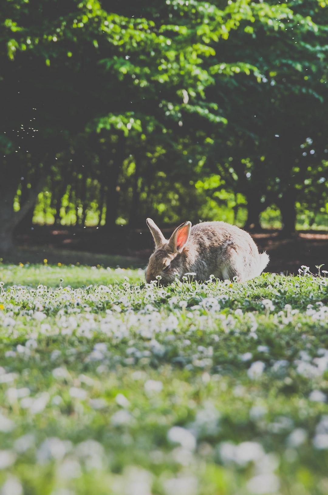 🐰 🐇 A rabbit eating dinner.