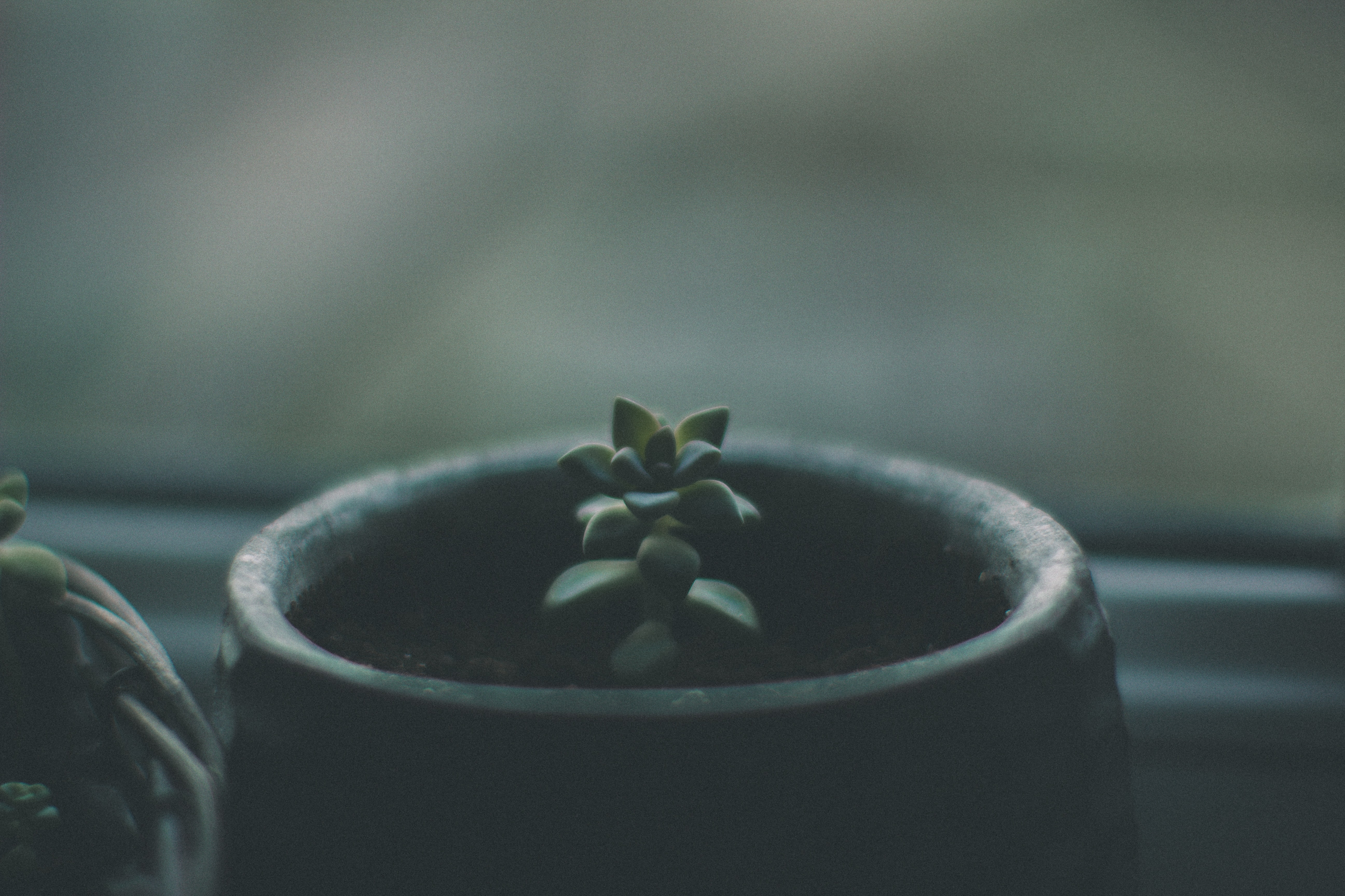 Small succulent plant sprouts from its pot near a window