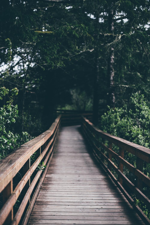 wooden bridge between tress