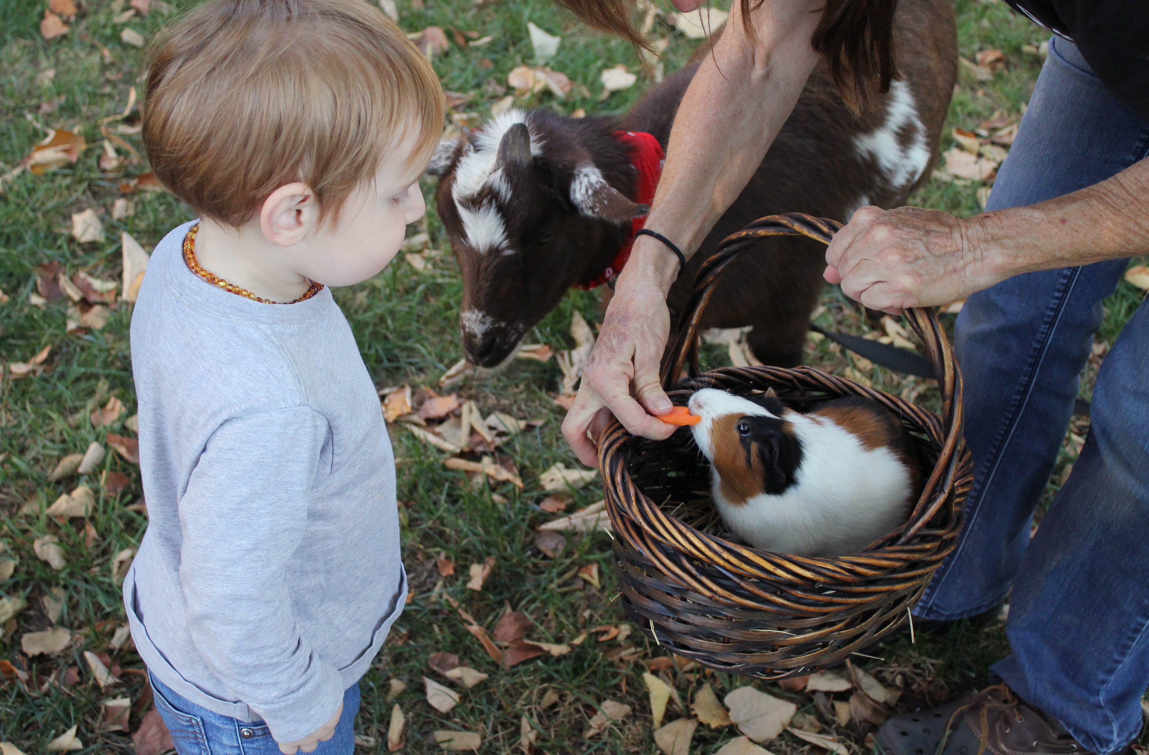 Adult farmer holds a bunny in a basket, feeds it a carrot while a boy looks on