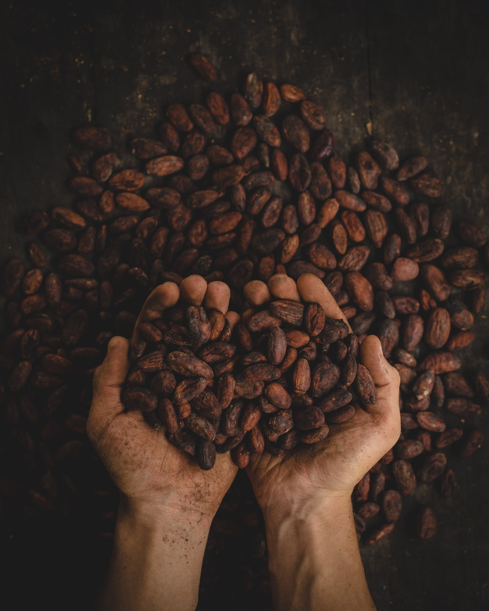 person holding dried beans