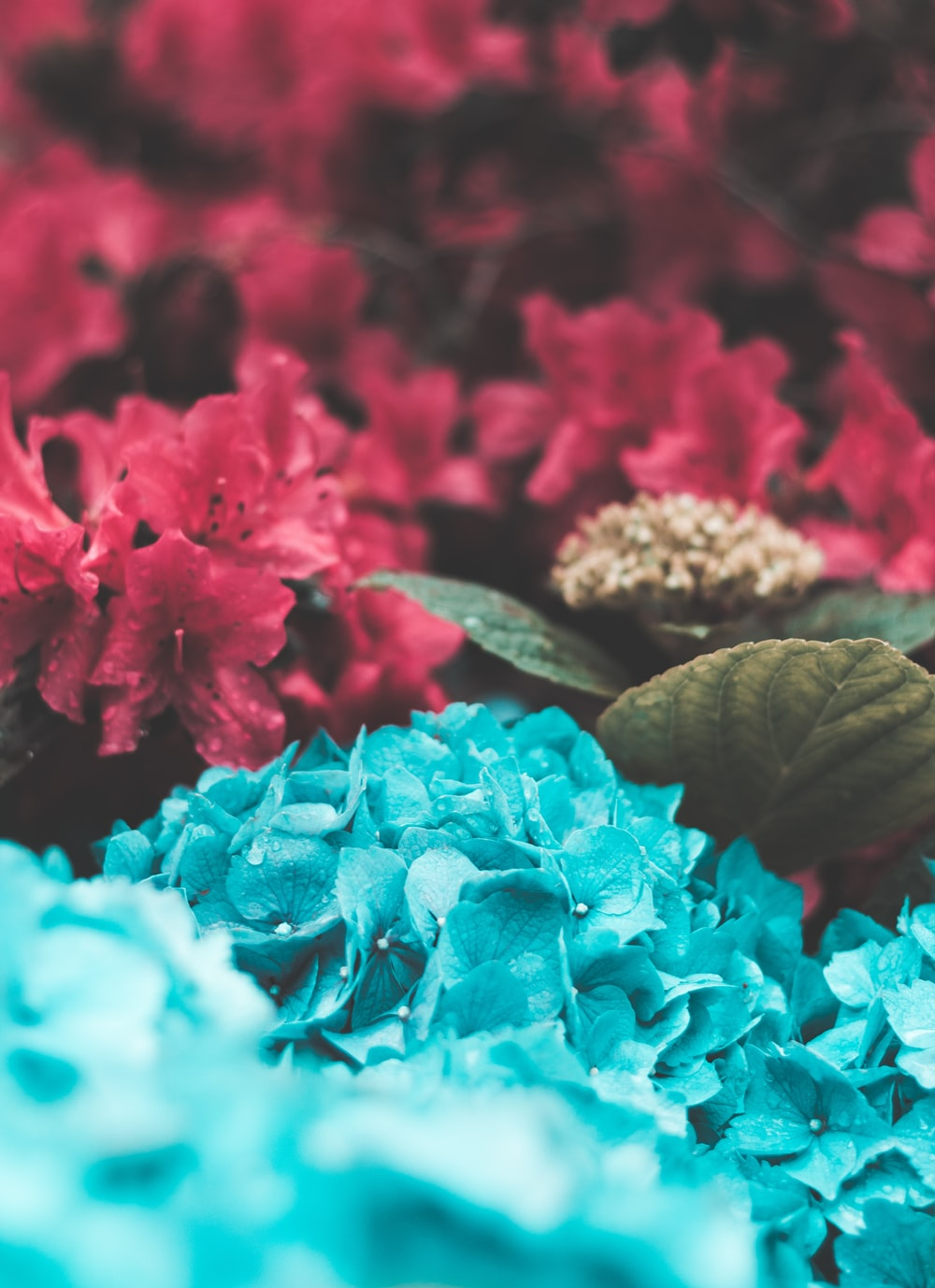 red and teal flowers and green leaf