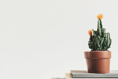 green cactus plant with orange flowers on top of the table
