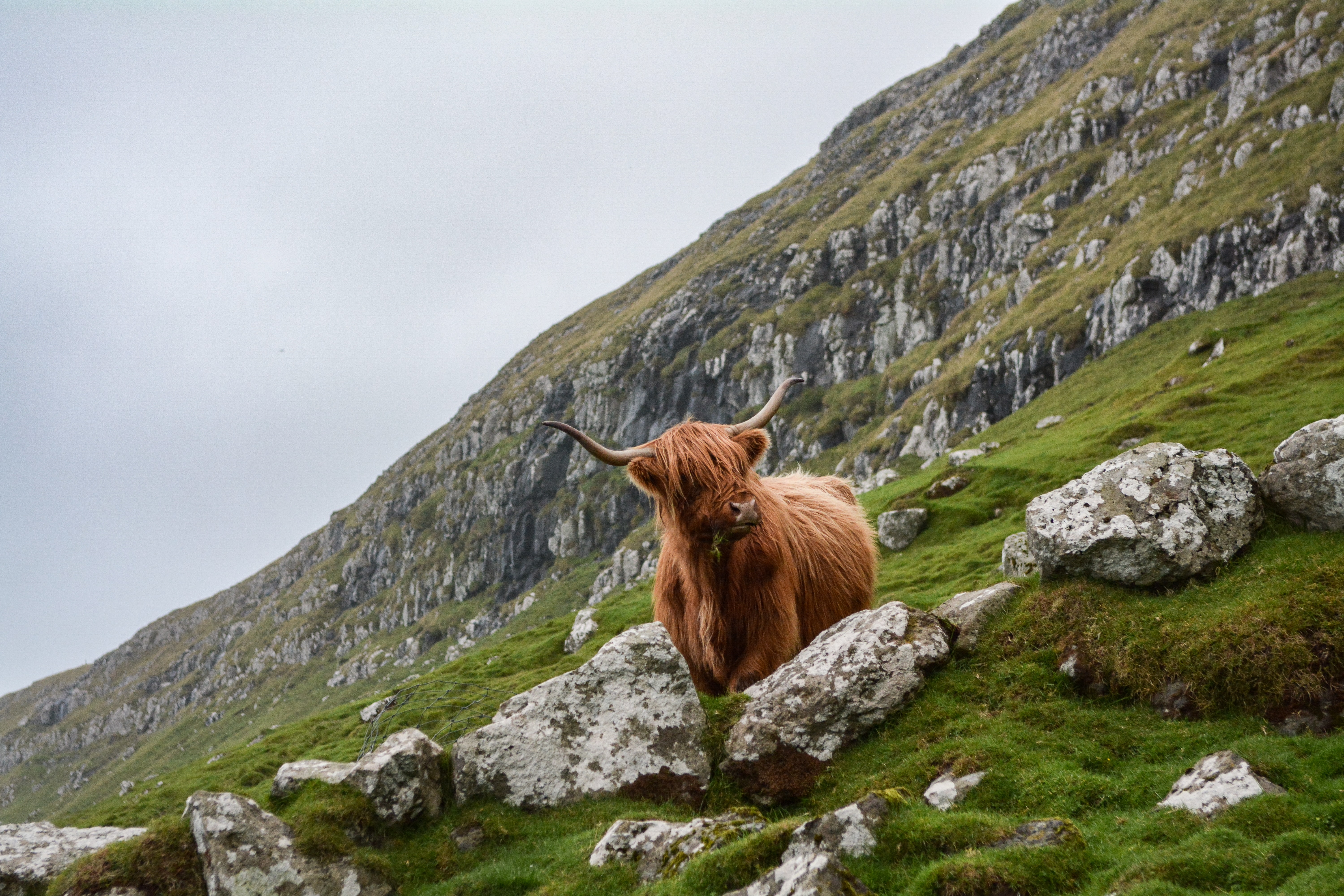 brown ox on mountain