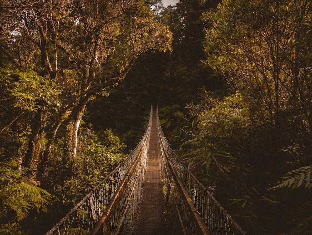 brown bridge in middle of juggle