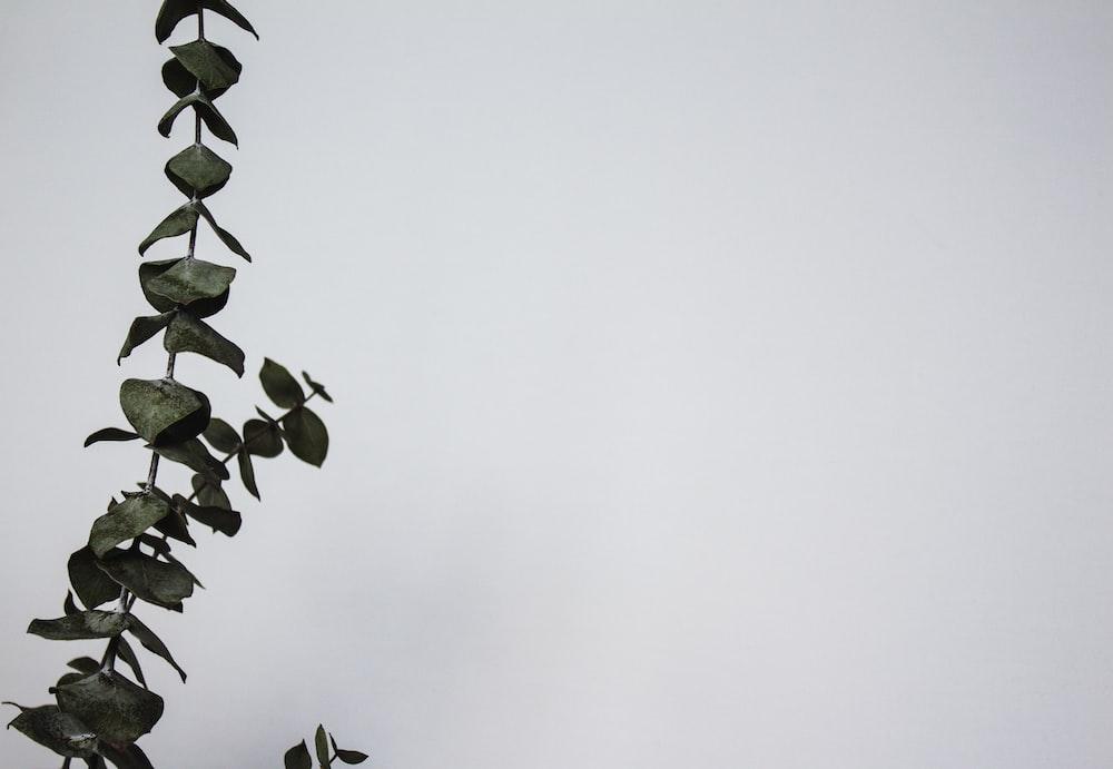 macro photography of green plants
